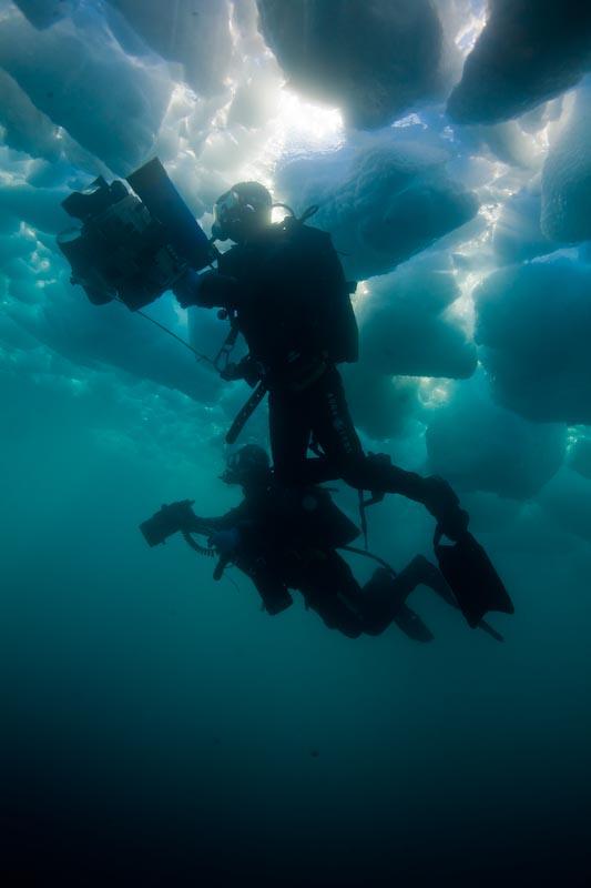 Dans les icebergs du Groenland