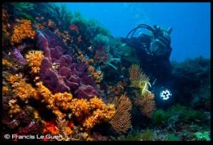plongée Marseille archipel