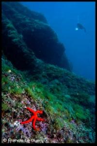 Marseille archipel plongée