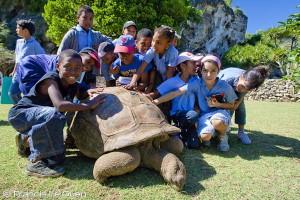 Tortue d'Aldabra Rodrigues