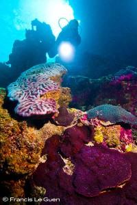 Un monde de corail...