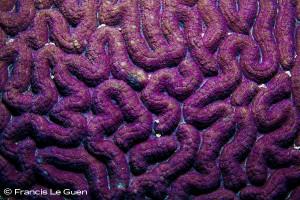 Cerveau de Neptune