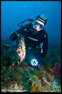 archipel plongée écueil du miet