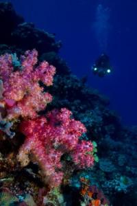 Au bord de la fosse des Tonga