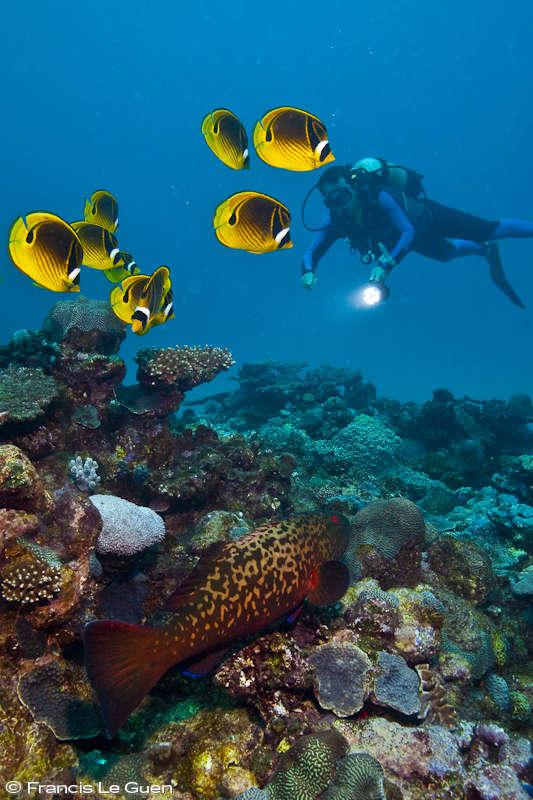Plongée à Rodrigues