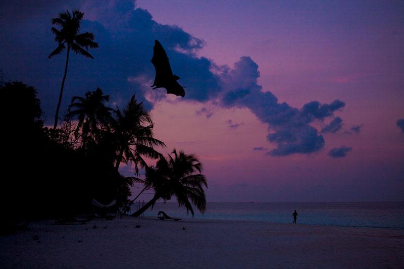 Maldives-Roussette