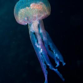 La grotte aux méduses
