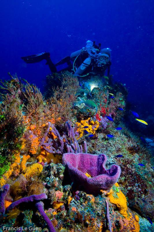 Eponges des Caraïbes