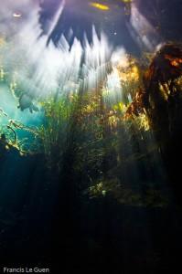 La forêt humide de Kukulkan
