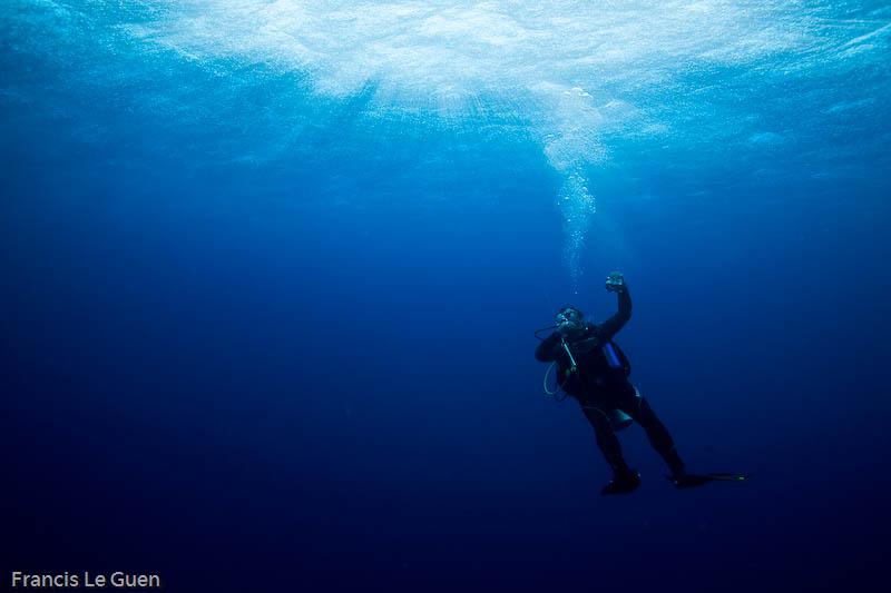 Plongée à Tortugas