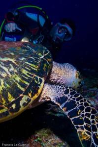 Playa del Carmen - plongée - tortue