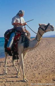 Dahab egypte plongée chameau