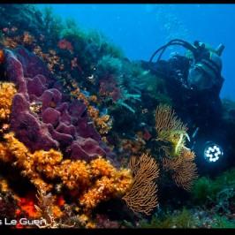 Plongée à Marseille : Les poissons lune de l'archipel