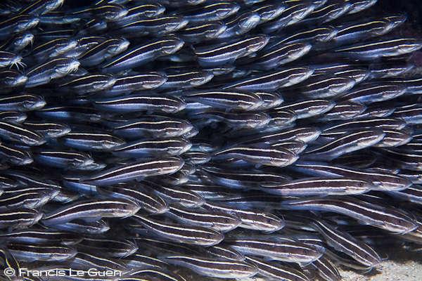 Rodrigues : Plongée sur le dos de Pégase