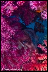 Plongée à Marseille : La pointe Caramassaigne