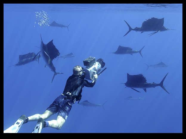 Plongée au Mexique avec les espadons