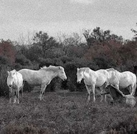 Camargue exquise
