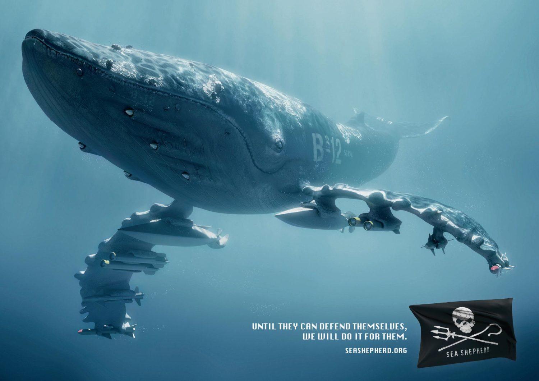 Sea Shepherd Conservation Society 177188_10151028469670932_1677375619_o
