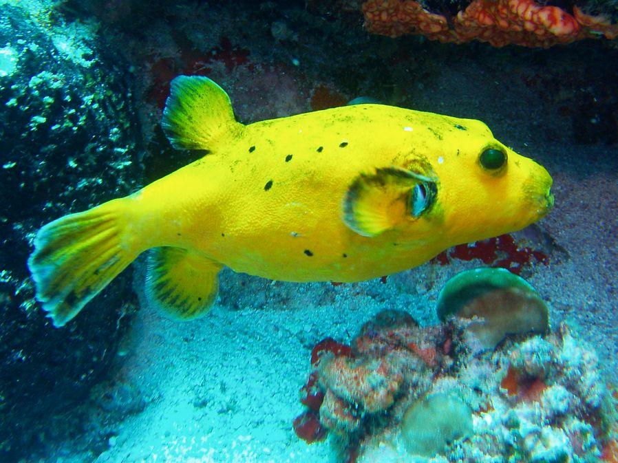 plongee aux seychelles danger