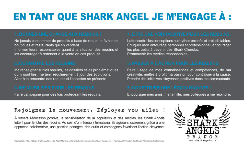 Shark-Angels