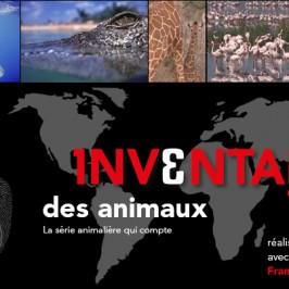 L'inventaire des animaux : plongez dans l'arche de Noé !