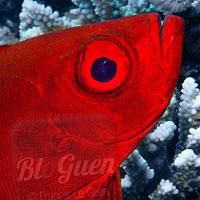 Croisière en mer rouge sur l'Exocet