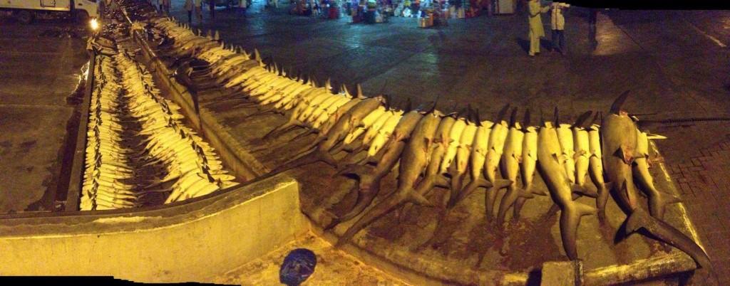 requins dubai