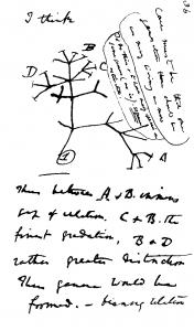 Darwin_tree