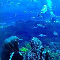 Dubaï : plongez dans l'aquarium aux requins…