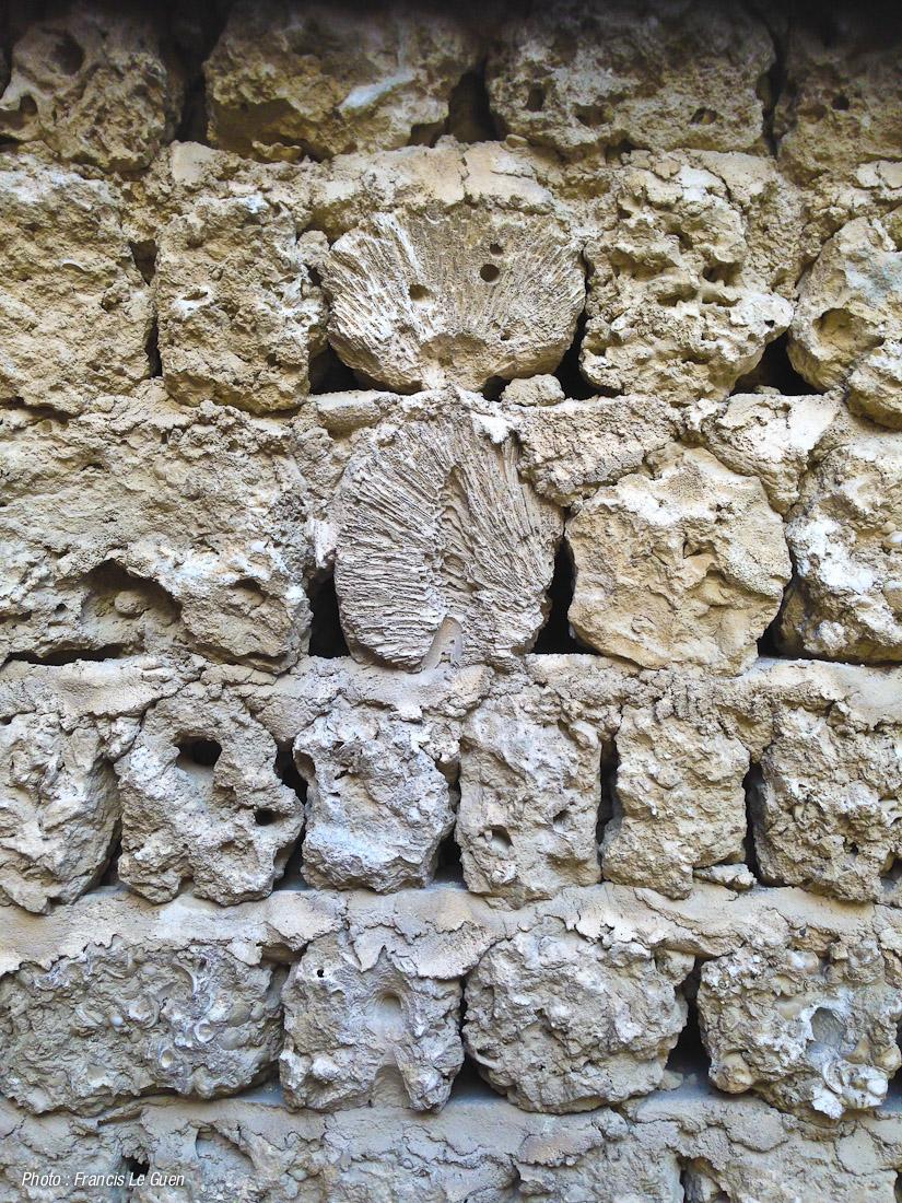 mur de corail