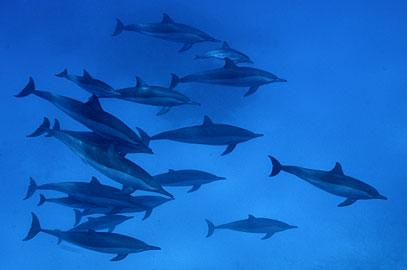 Égypte : plongée avec les dauphins sauvages de Sataya