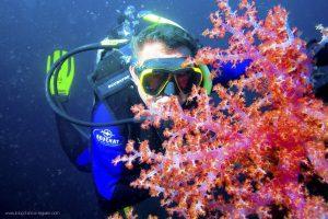 TripAdekua - USAT Liberty - Plongées à Bali